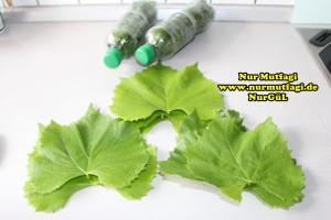 sisede asma yapraki nasil kurulur tarifi (2)